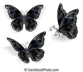 蝴蝶, 集合, 黑色, morpho