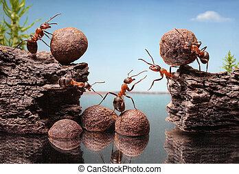 螞蟻, 配合, 建立, 隊, 水壩