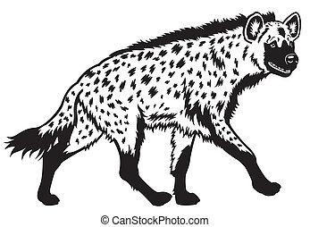 被察覺的 鬣狗, 黑色, 白色