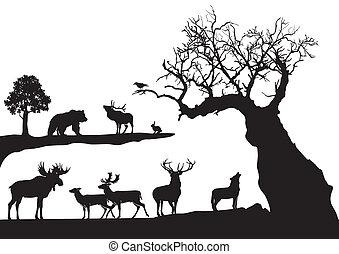 被扭曲, 樹, 野生動物, 被隔离
