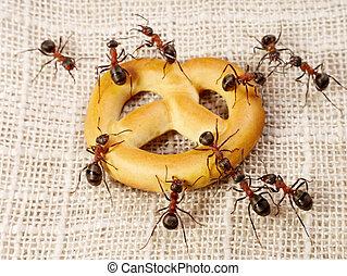 解決, 螞蟻, 配合, 蛋糕, 問題, 運輸