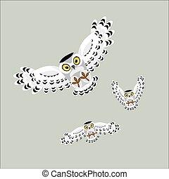 貓頭鷹, 飛行, 三, 極地