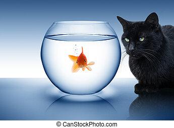 貓, 金魚, 黑色, 危險, -