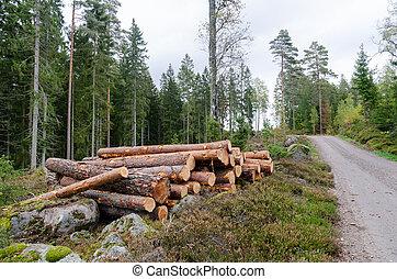 路邊, 森林, 木材, 針葉樹, 堆