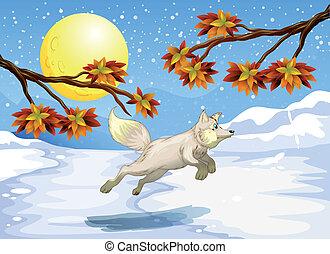跳躍, 狐狸