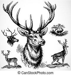 跳躍, 矢量, 鹿
