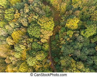 車道, 空中, 國家, 秋季森林, 看法