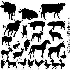 農場, 黑色半面畫像, 集合, 動物