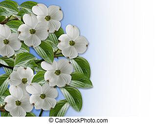 邊框, 山茱萸, 花, 植物
