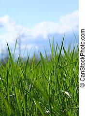 野生的青草