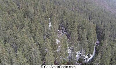 針葉樹, 航空的射, 森林