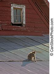 錫, 熱, 屋頂, 貓