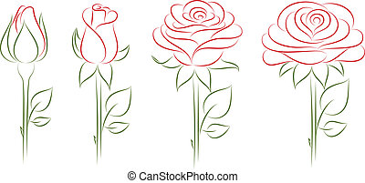 開花, roses.