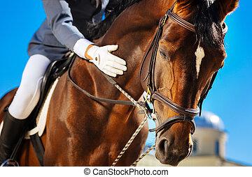 關心, 使平靜, 馬, 他的, 騎馬, 特別喜愛, horserace, 以前