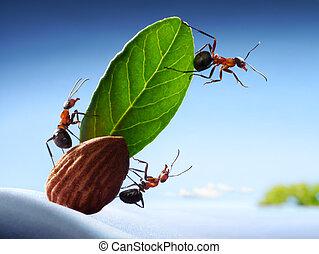 陸地, 螞蟻, 全体船員, 游艇, 海洋, 視力, 配合