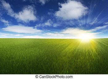 陽光普照, 在上方, 天空, 長滿草, 領域