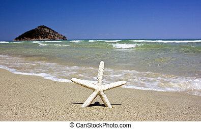 陽光普照, 海灘, starfish, 夏天