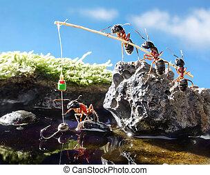 隊, 螞蟻, 釣魚棒