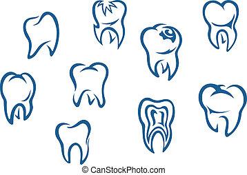 集合, 人類牙齒