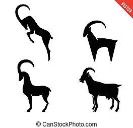集合, 黑色半面畫像, 被隔离, 背景。, 黑色, 白色, 山羊, 圖象