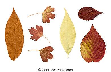 離開, 背景, 被隔离, 乾燥, 秋天, 白色