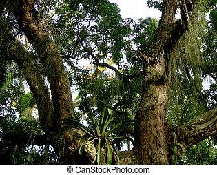 雨林, amazonian, 樹
