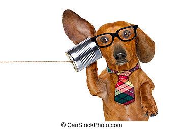 電話, 細心, 狗, 听