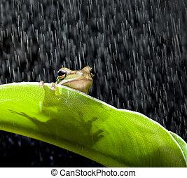 青蛙, 雨