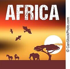 非洲, 背景, infographics, -