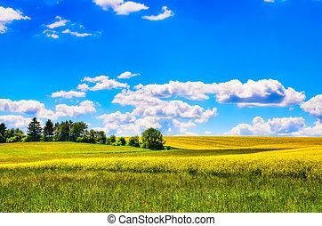 領域, 花, 綠色的草地, 黃色