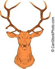 頭, 布朗, 鹿, 背景。, 黑色半面畫像, 白色