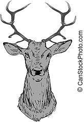 頭, 灰色, 鹿, 背景。, 黑色半面畫像, 白色