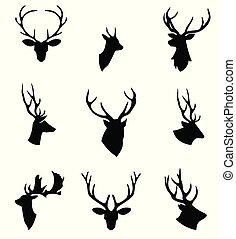 頭, 鹿, animals., head.
