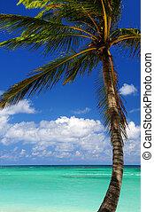 風景, 加勒比海海, 看法