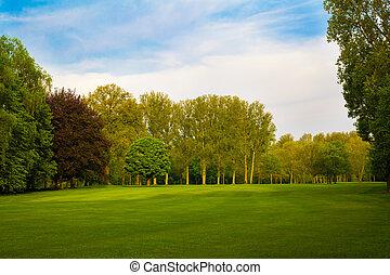 風景。, 夏天, 樹, 綠色的領域, 美麗