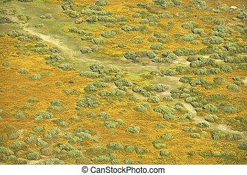 風景。, 大草原, 空中