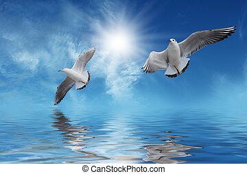 飛行, 白色的太陽, 鳥