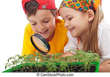 食物, 孩子, 增長, 學習