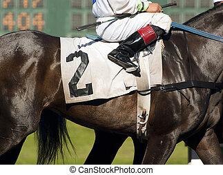 馬, 職業賽馬騎師, 開始, 第二, 領導, horserace, 門