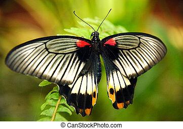 鮮艷, butterfly.