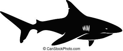 鯊魚, 矢量, 黑色半面畫像
