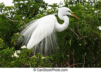 鳥, 公園, 佛羅里達, 熱帶