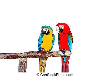 鸚鵡, 二