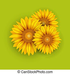 黃色, 向日葵, 夏天, 背景
