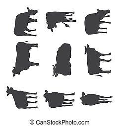 黑色半面畫像, 不同, 母牛, 插圖, 集合, 擺在, 矢量, isolated., 黑色