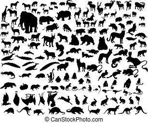 黑色半面畫像, 動物下落
