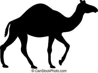 黑色半面畫像, 沙漠, 矢量, camel., 插圖, 黑色, 動物