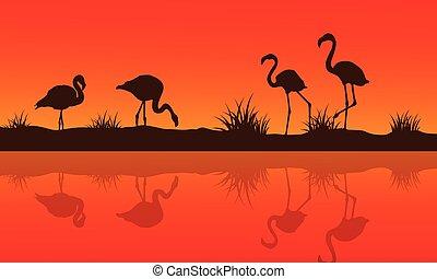 黑色半面畫像, 火烈鳥, 湖, 彙整, 場景