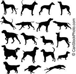 黑色半面畫像, 狗, 打獵