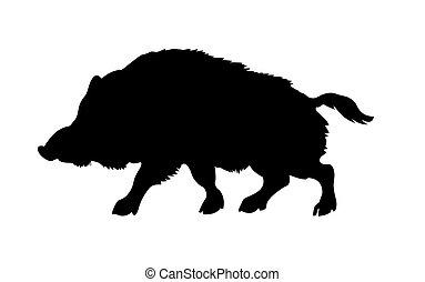 黑色半面畫像, 背景, 被隔离, 白色, 野豬, 荒野